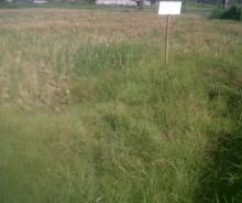 Dijual Tanah 480 Meter Strategis di Gianjar, Bali PR774
