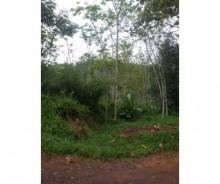 Dijual Tanah Luas 25 Hektar di Subang, Jawa Barat AG679
