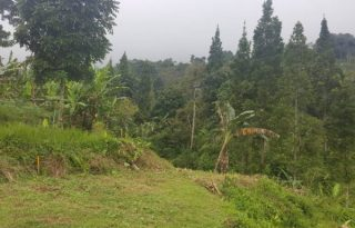 Dijual Tanah 3300 m2 Cocok Untuk Villa di Cisarua, Cilember AG1013