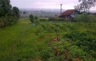 Dijual Tanah Luas 3.300 Meter View Bukit di Cisarua, Bogor AG511