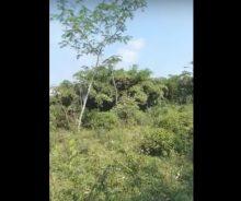 Dijual Tanah Luas 10.468 m2 di Sajira, Lebak, Banten P1297